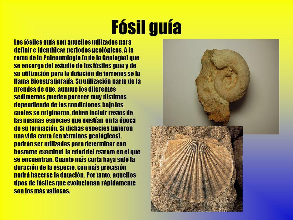 Fósil guía Los fósiles guía son aquellos utilizados para definir e identificar periodos geológicos. A la rama de la Paleontología (o de la Geología) q
