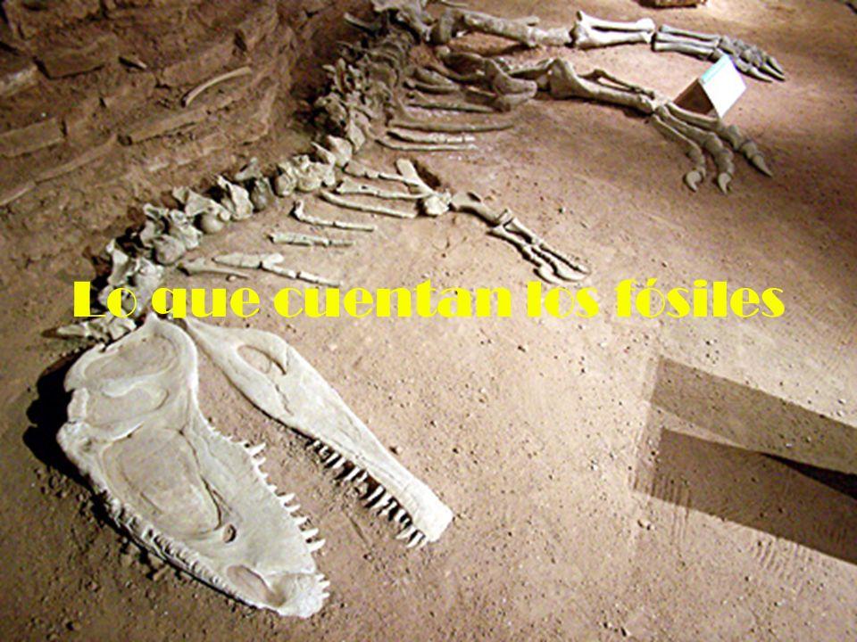 Lo que podemos conocer Los fósiles constituyen una fuente de información muy valiosa.