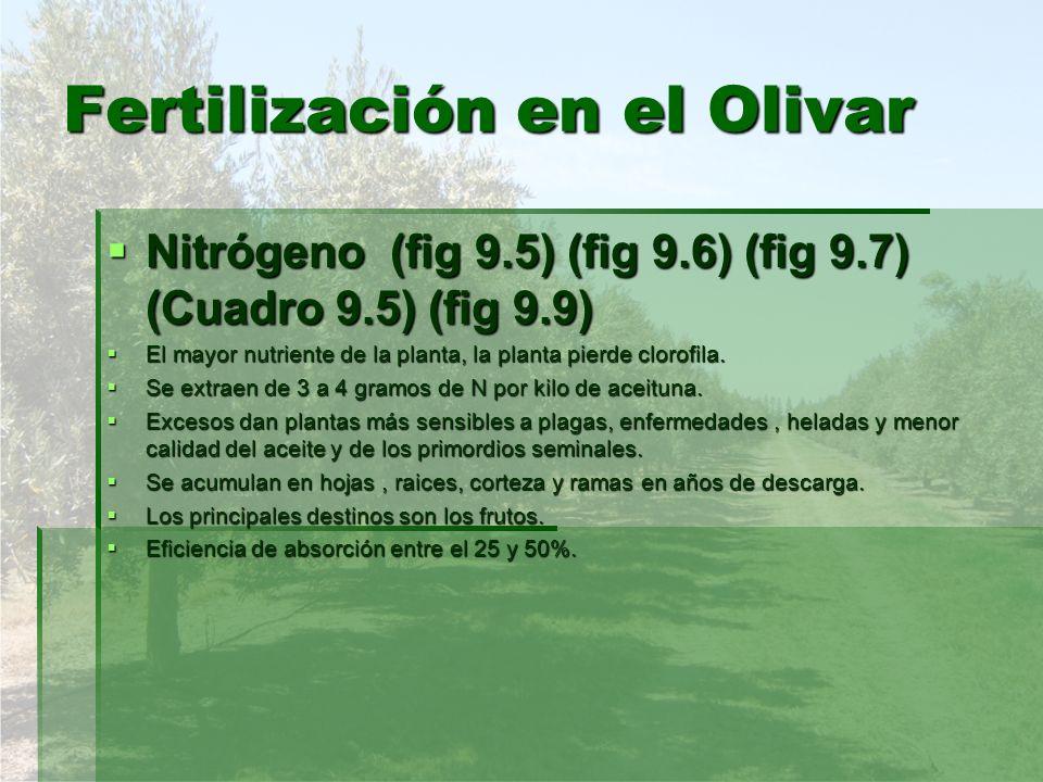 Fertilización en el Olivar Nitrógeno (fig 9.5) (fig 9.6) (fig 9.7) (Cuadro 9.5) (fig 9.9) Nitrógeno (fig 9.5) (fig 9.6) (fig 9.7) (Cuadro 9.5) (fig 9.