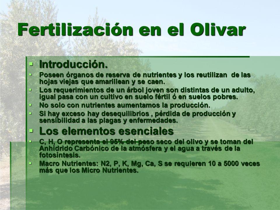 Fertilización en el Olivar Introducción. Introducción. Poseen órganos de reserva de nutrientes y los reutilizan de las hojas viejas que amarillean y s