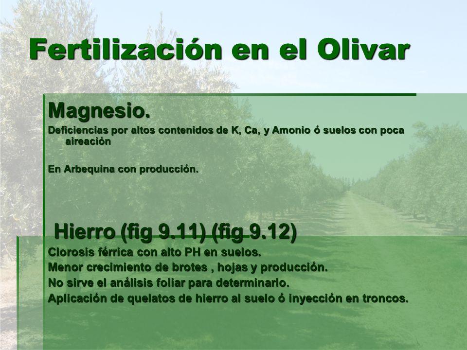 Fertilización en el Olivar Magnesio. Deficiencias por altos contenidos de K, Ca, y Amonio ó suelos con poca aireación En Arbequina con producción. Hie