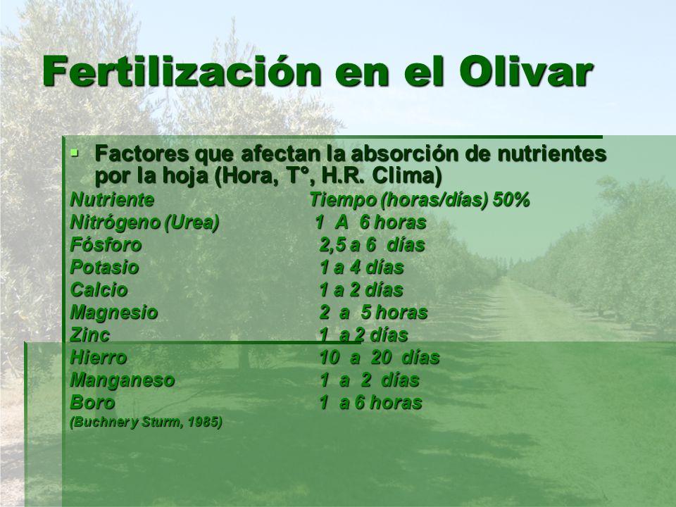 Fertilización en el Olivar Factores que afectan la absorción de nutrientes por la hoja (Hora, T°, H.R. Clima) Factores que afectan la absorción de nut