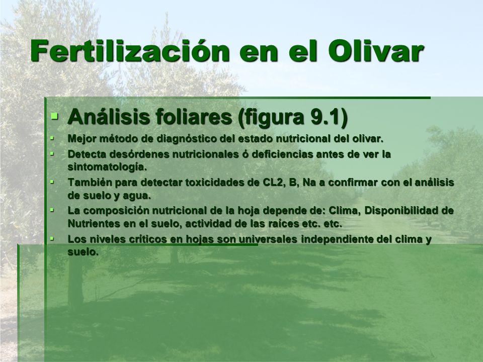 Fertilización en el Olivar Análisis foliares (figura 9.1) Análisis foliares (figura 9.1) Mejor método de diagnóstico del estado nutricional del olivar