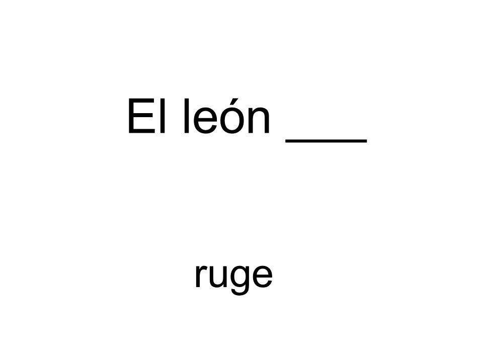 El león ___ ruge