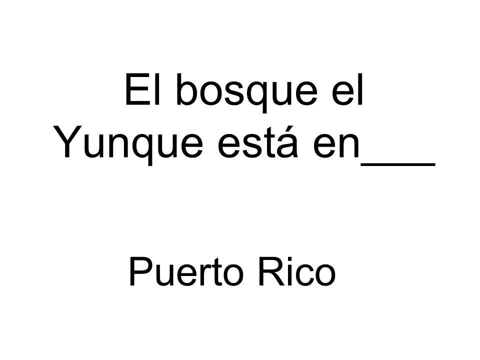 El bosque el Yunque está en___ Puerto Rico