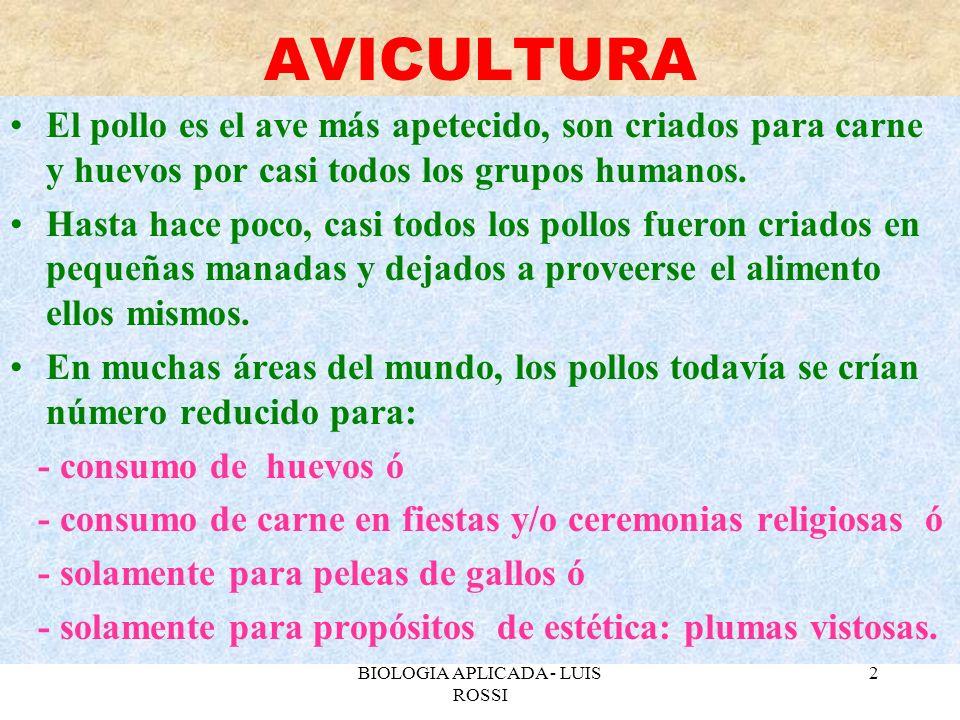 BIOLOGIA APLICADA - LUIS ROSSI 3 RAZAS DE AVES Los países de occidente poseen unas 37 razas de importancia comercial que varian en la conversión del alimento.