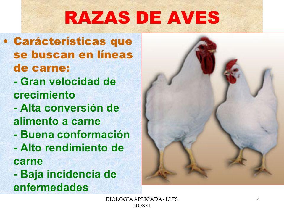 BIOLOGIA APLICADA - LUIS ROSSI 5 RAZAS DE AVES Características que se buscan en las líneas de ponedoras: - Alta tasa de postura - Alta conversión de alimento a huevos - Aves pequeñas - Baja insidencia de cloquez - Huevos de buen tamaño