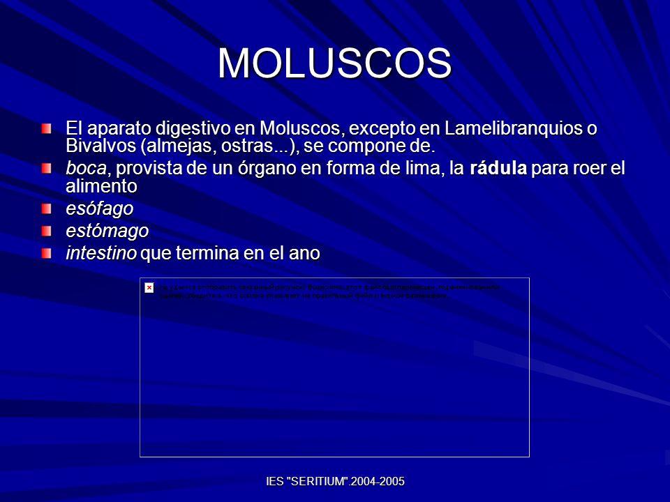 MOLUSCOS El aparato digestivo en Moluscos, excepto en Lamelibranquios o Bivalvos (almejas, ostras...), se compone de. boca, provista de un órgano en f