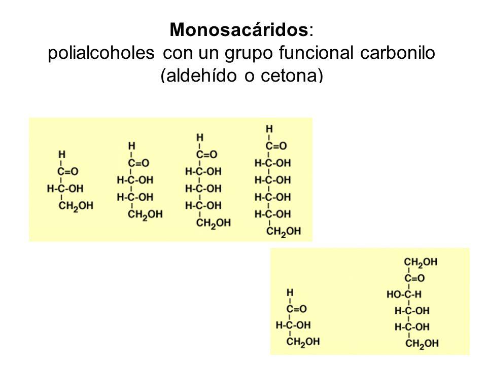 Monosacáridos: polialcoholes con un grupo funcional carbonilo (aldehído o cetona)