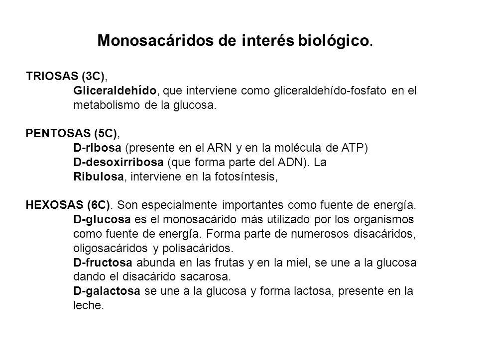 Monosacáridos de interés biológico. TRIOSAS (3C), Gliceraldehído, que interviene como gliceraldehído-fosfato en el metabolismo de la glucosa. PENTOSAS