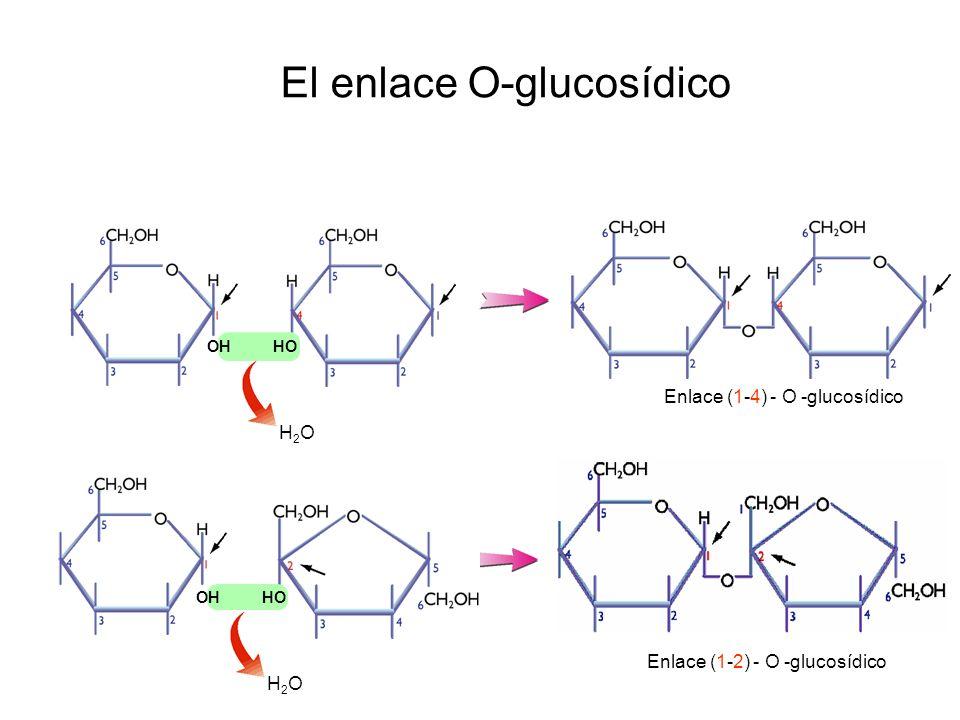 El enlace O-glucosídico H2OH2OH2OH2O OH HO Enlace (1-4) - O -glucosídico Enlace (1-2) - O -glucosídico OH HO