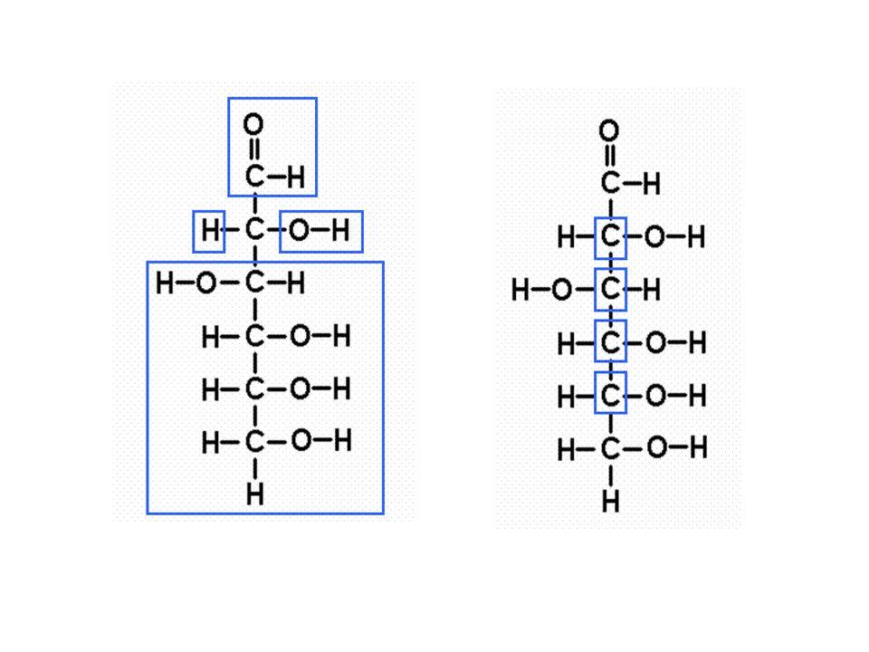Principal nutriente de la respiración celular en animales.