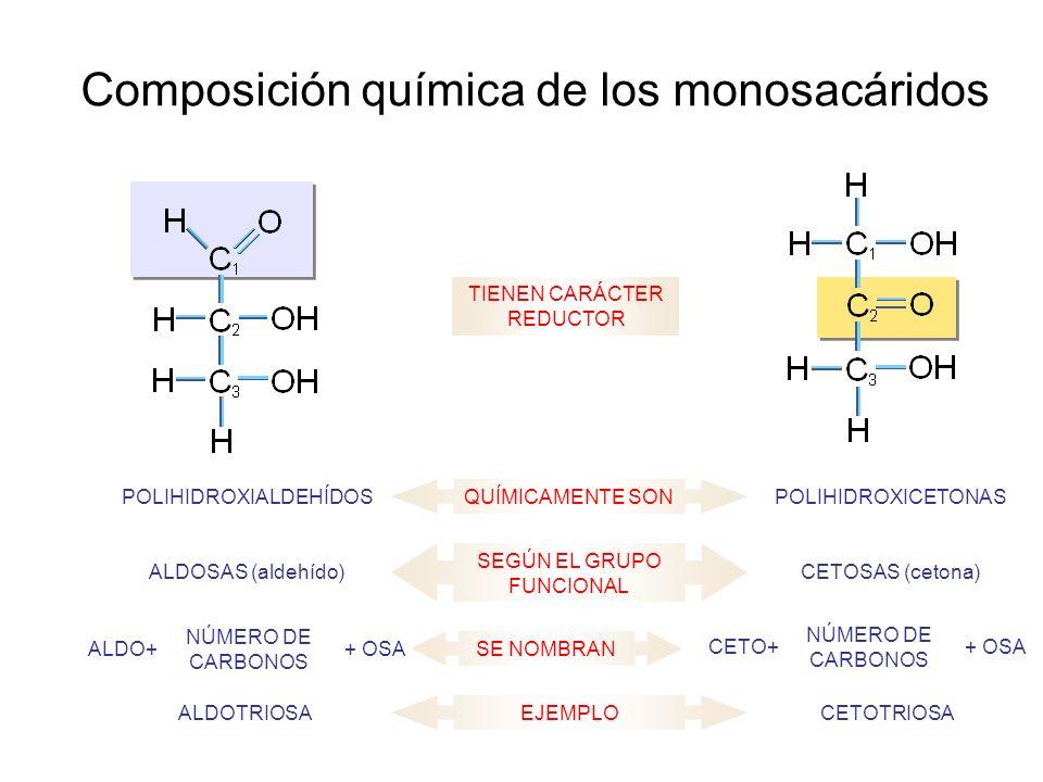 Composición química de los monosacáridos QUÍMICAMENTE SONPOLIHIDROXICETONASPOLIHIDROXIALDEHÍDOS SEGÚN EL GRUPO FUNCIONAL CETOSAS (cetona)ALDOSAS (aldehído) TIENEN CARÁCTER REDUCTOR SE NOMBRAN ALDO+ NÚMERO DE CARBONOS + OSACETO+ NÚMERO DE CARBONOS + OSA EJEMPLOCETOTRIOSAALDOTRIOSA