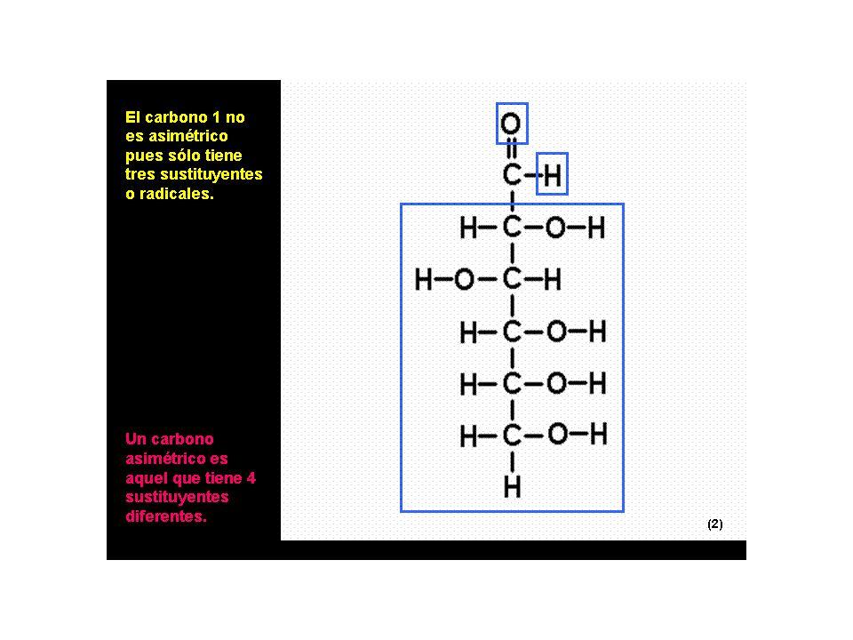 C HO CHOH CHOH CHOH CH 2 OH C H O CHHO CH O H CHOH CH 2 OH CH 2 O H CHHO C H O CHOH CHOH CHHO CHHO C H O CHOH CH 2 OH CHOH C HO CHHO H C O D-ribosaD-arabinosaD-xilosaD-lixosa D-alosaD-altrosaD-glucosaD-manosaD-gulosaD-idosaD-galactosaD-talosa Fórmulas lineales (aldopentosas y aldohexosas) CHOH CHOH CHOH C H 2 OH CHOH CHOH CHOH CH 2 OH Todos los monosacáridos cuyo último carbono asimétrico tiene el grupo –OH a la derecha se denomina forma D.