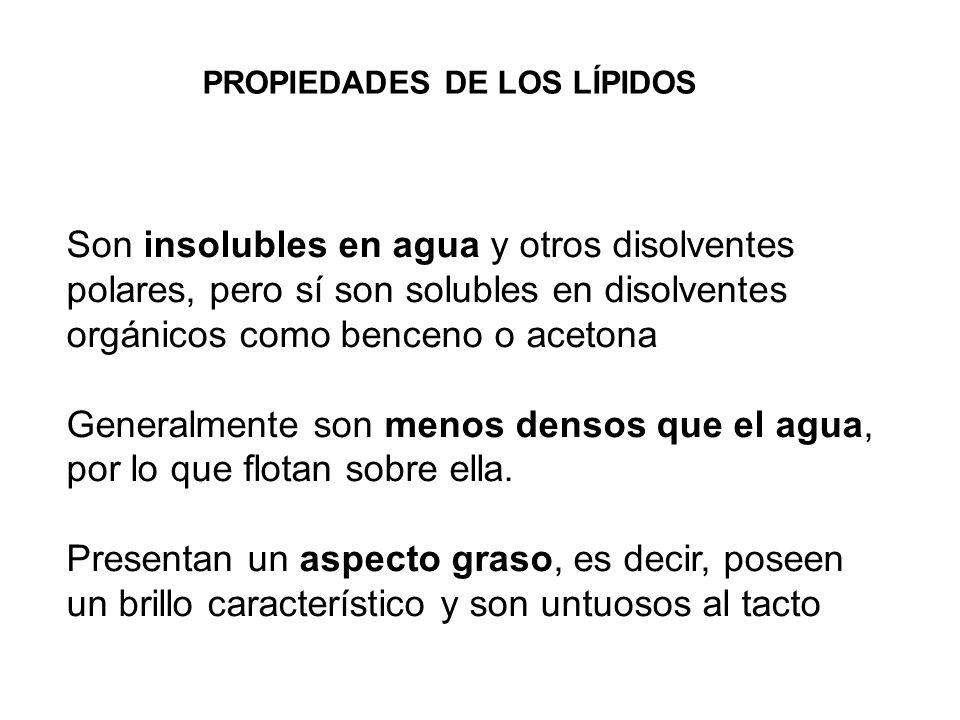 Saponificables (Contienen ácidos grasos) Acilglicéridos (grasas) Ceras Fosfolípidos Esfingolípidos Insaponificables (No contienen ácidos grasos) Terpenos Esteroides Prostaglandinas CLASIFICACIÓN DE LOS LÍPIDOS