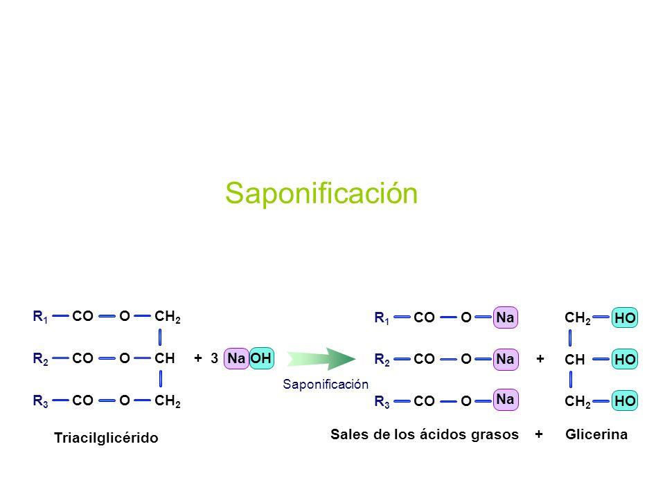 Triacilglicérido CH 2 CH CH 2 O O O R1R1 R2R2 R3R3 CO + 3 Na OH Sales de los ácidos grasos Na O O O R1R1 R2R2 R3R3 CO CH 2 CH CH 2 HO + Saponificación