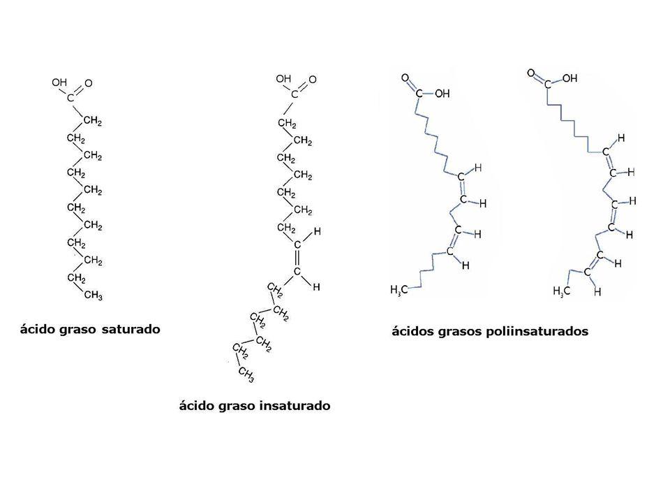Reserva energética Las grasas animales se almacenan en el tejido adiposo Las grasas vegetales se almacenan principalmente en las semillas Estructural Los fosfolípidos forman la parte fundamental de las membranas celulares.