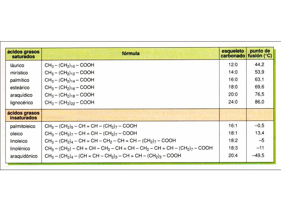 Propiedades de los ácidos grasos a)Punto de fusión: Cuanto más largas sean las cadenas hidrocarbonadas más alto es el punto de fusión.