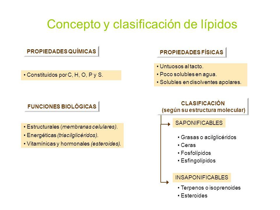 Concepto y clasificación de lípidos PROPIEDADES QUÍMICAS Constituidos por C, H, O, P y S. PROPIEDADES FÍSICAS Untuosos al tacto. Poco solubles en agua