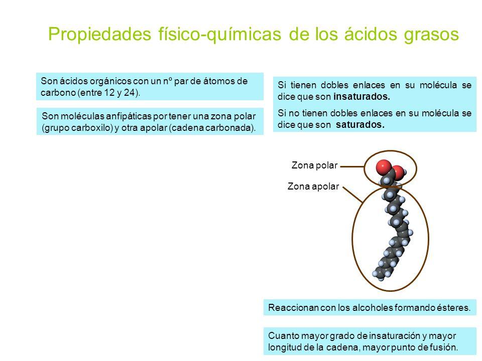 Propiedades físico-químicas de los ácidos grasos Son moléculas anfipáticas por tener una zona polar (grupo carboxilo) y otra apolar (cadena carbonada)