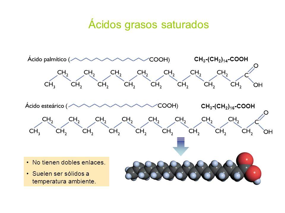 Ácidos grasos saturados No tienen dobles enlaces. Suelen ser sólidos a temperatura ambiente. CH 3 -(CH 2 ) 14 -COOH CH 3 -(CH 2 ) 16 -COOH