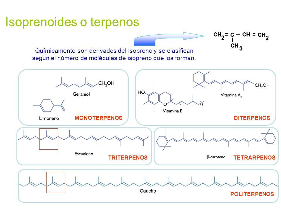 Isoprenoides o terpenos Químicamente son derivados del isopreno y se clasifican según el número de moléculas de isopreno que los forman. POLITERPENOS