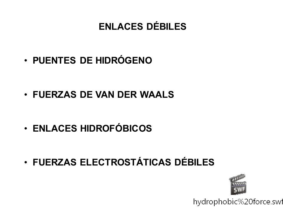 ENLACES DÉBILES PUENTES DE HIDRÓGENO FUERZAS DE VAN DER WAALS ENLACES HIDROFÓBICOS FUERZAS ELECTROSTÁTICAS DÉBILES