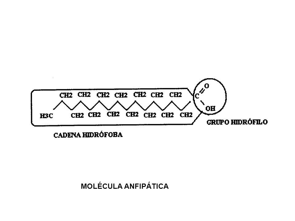 MOLÉCULA ANFIPÁTICA