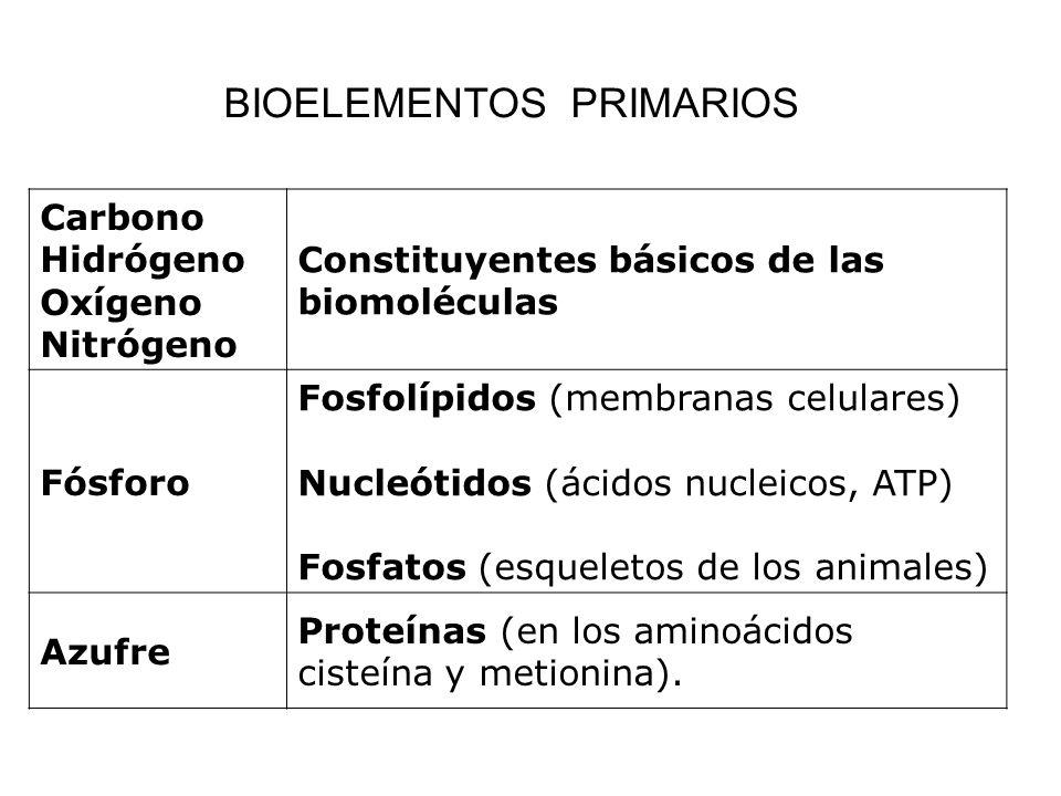 Carbono Hidrógeno Oxígeno Nitrógeno Constituyentes básicos de las biomoléculas Fósforo Fosfolípidos (membranas celulares) Nucleótidos (ácidos nucleico