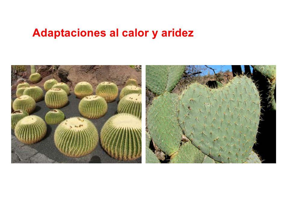 Adaptaciones al calor y aridez