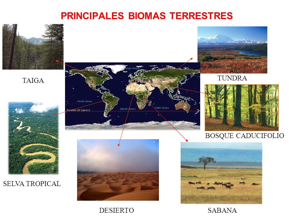 PRINCIPALES BIOMAS TERRESTRES SELVA TROPICAL DESIERTOSABANA BOSQUE CADUCIFOLIO TUNDRA TAIGA