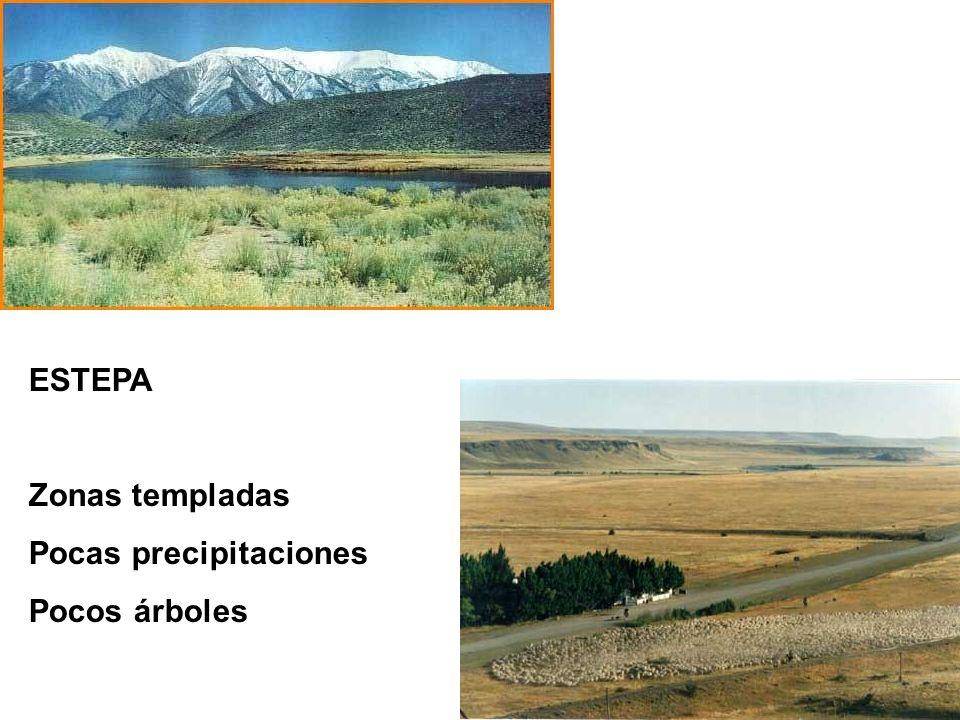 ESTEPA Zonas templadas Pocas precipitaciones Pocos árboles