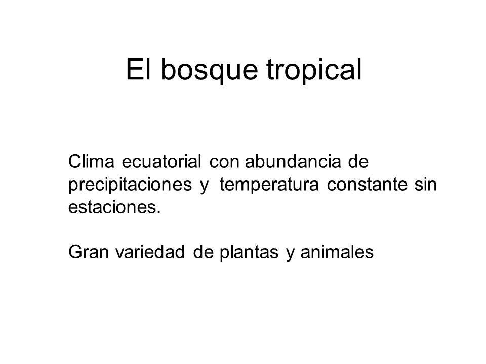 El bosque tropical Clima ecuatorial con abundancia de precipitaciones y temperatura constante sin estaciones. Gran variedad de plantas y animales