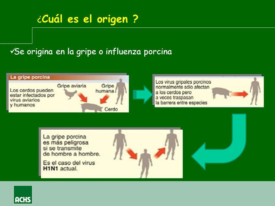 Se origina en la gripe o influenza porcina ¿ Cuál es el origen ?