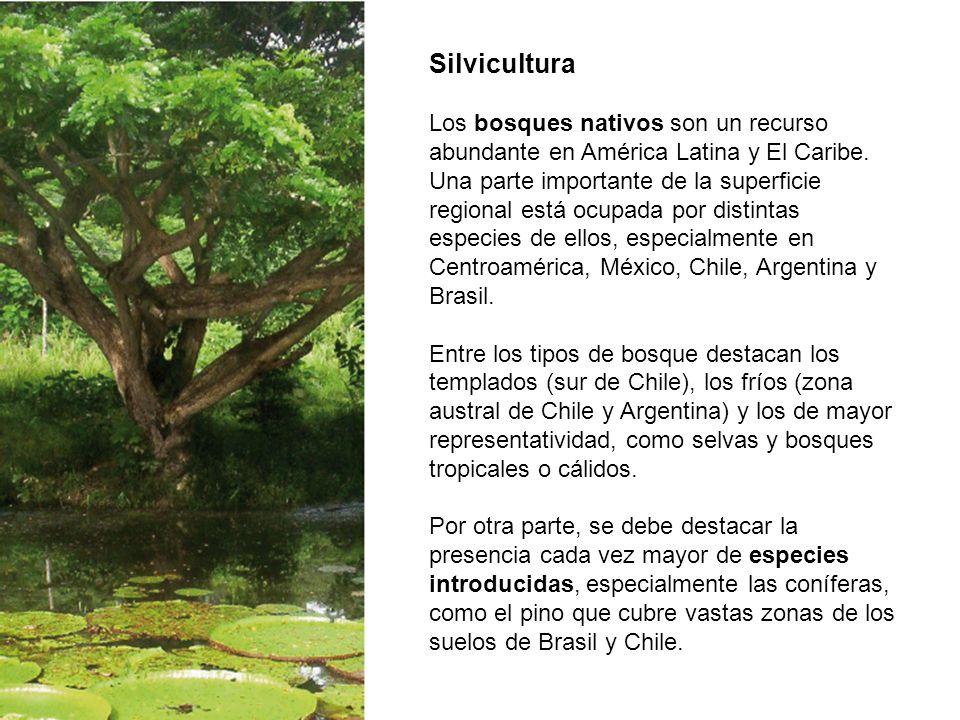 Silvicultura Los bosques nativos son un recurso abundante en América Latina y El Caribe. Una parte importante de la superficie regional está ocupada p