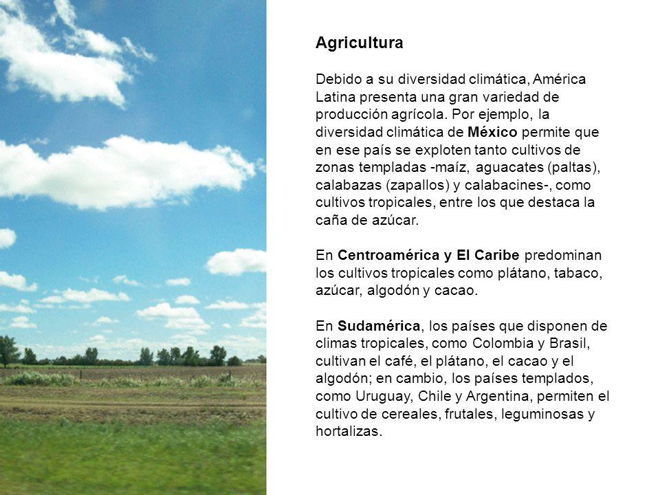 Agricultura Debido a su diversidad climática, América Latina presenta una gran variedad de producción agrícola. Por ejemplo, la diversidad climática d