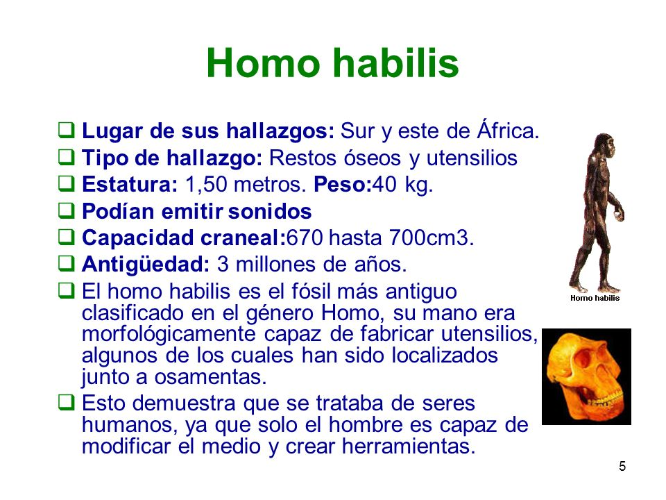 5 Homo habilis Lugar de sus hallazgos: Sur y este de África. Tipo de hallazgo: Restos óseos y utensilios Estatura: 1,50 metros. Peso:40 kg. Podían emi