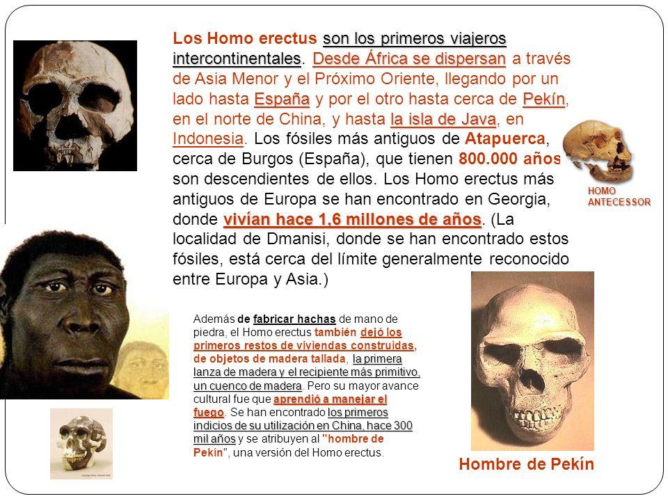 son los primeros viajeros intercontinentalesDesde África se dispersan EspañaPekín la isla de Java vivían hace 1,6 millones de años Los Homo erectus so