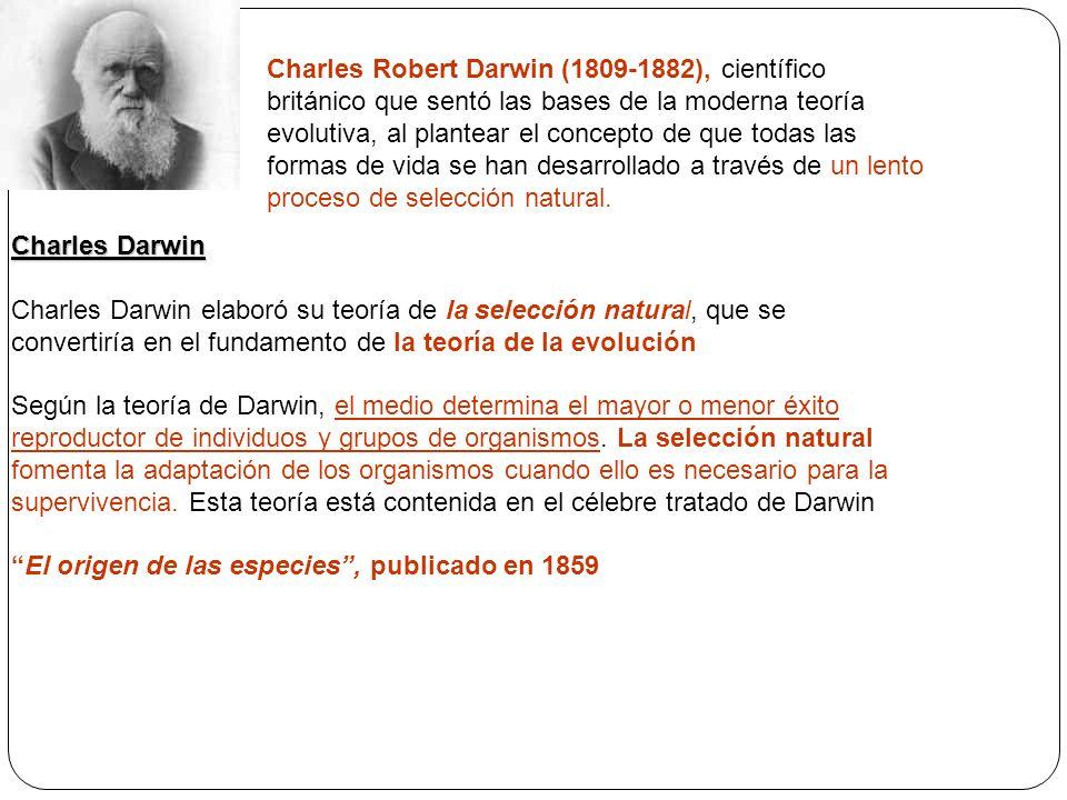 Charles Darwin Charles Darwin elaboró su teoría de la selección natural, que se convertiría en el fundamento de la teoría de la evolución Según la teo
