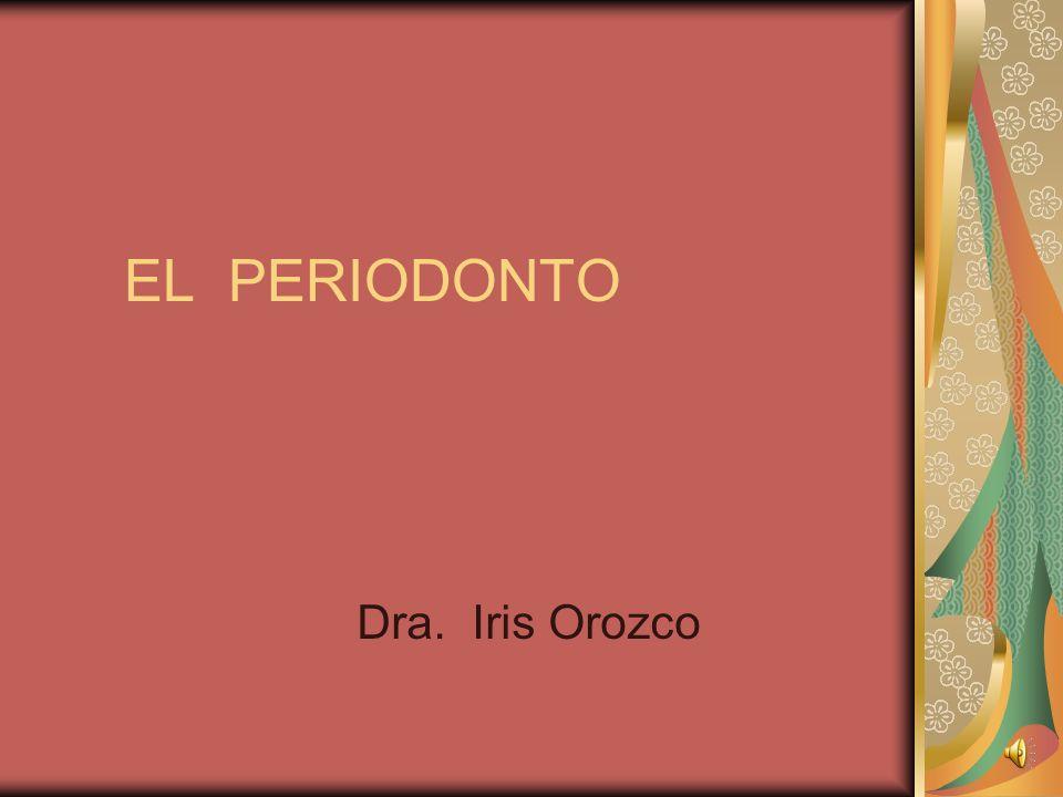 EL PERIODONTO Dra. Iris Orozco