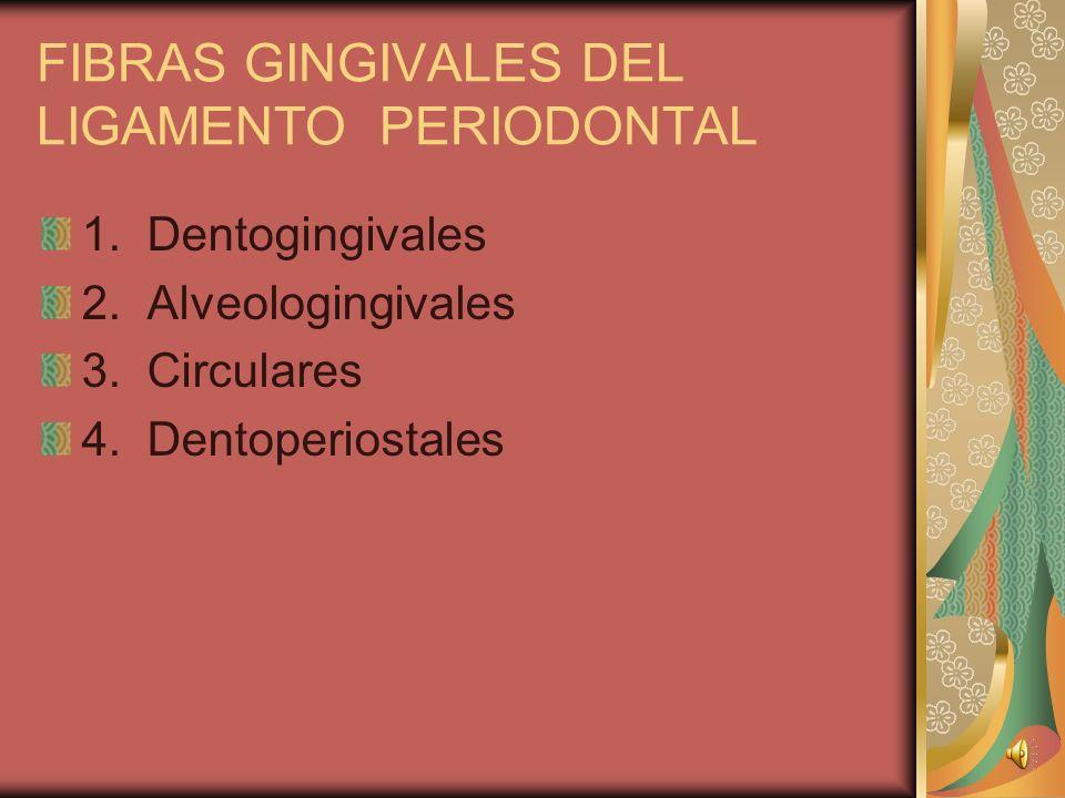 FIBRAS PERIODONTALES DEL LIGAMENTO 1. Horizontales 2. Oblicuas 3. Apicales 4. Interrradiculares 5. Transceptales 6. Fibras de la Cresta Alveolar