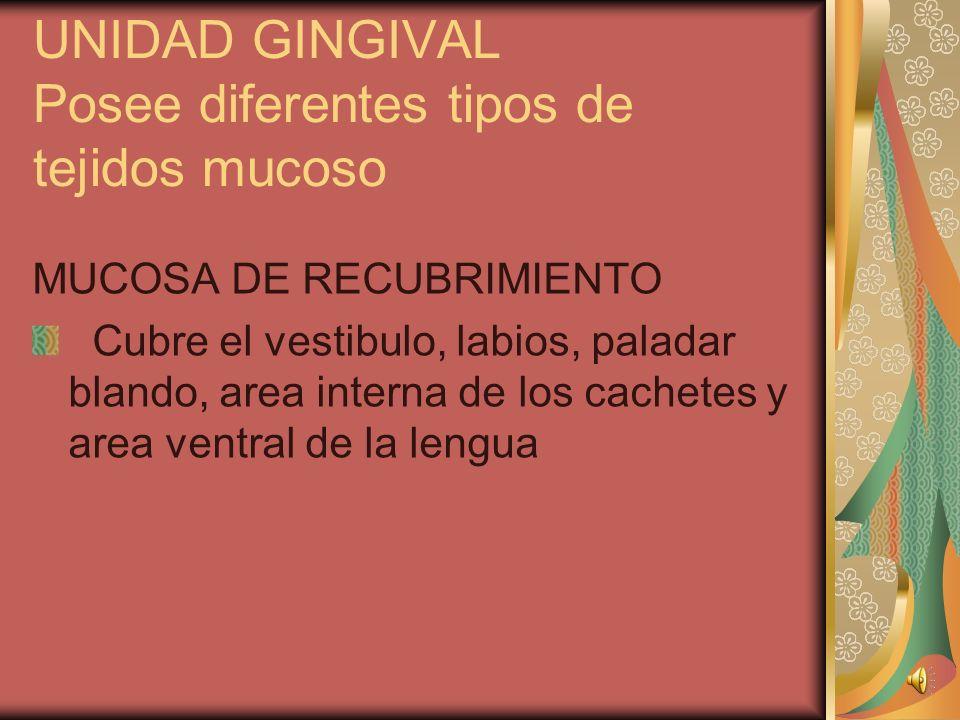 FIBRAS GINGIVALES DEL LIGAMENTO PERIODONTAL 1. Dentogingivales 2. Alveologingivales 3. Circulares 4. Dentoperiostales