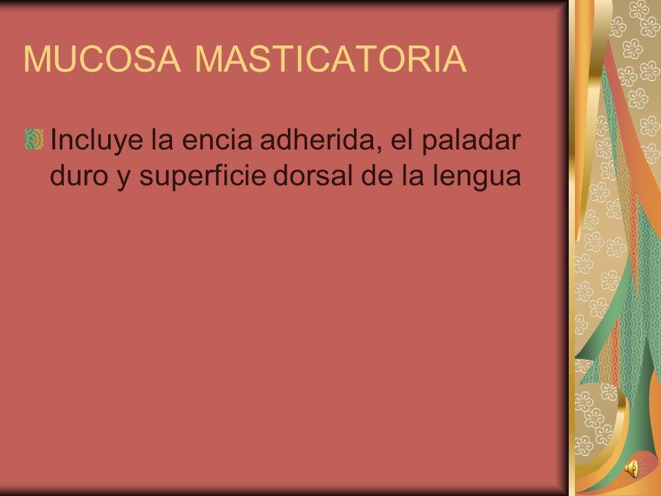 UNIDAD GINGIVAL Posee diferentes tipos de tejidos mucoso MUCOSA DE RECUBRIMIENTO Cubre el vestibulo, labios, paladar blando, area interna de los cache