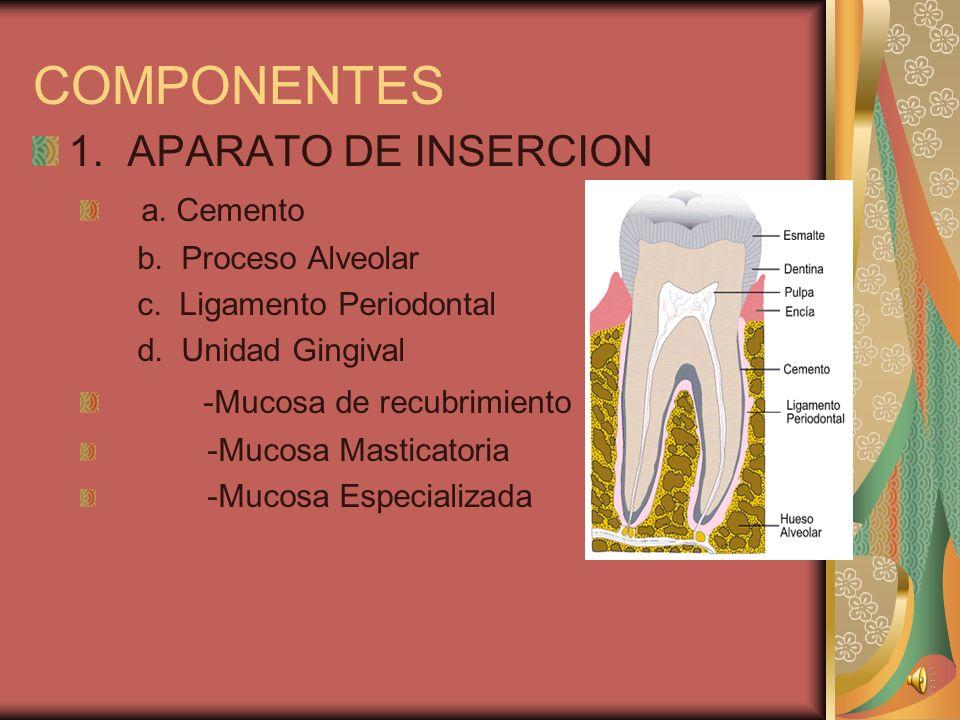 COMPONENTES 1.APARATO DE INSERCION a. Cemento b. Proceso Alveolar c.