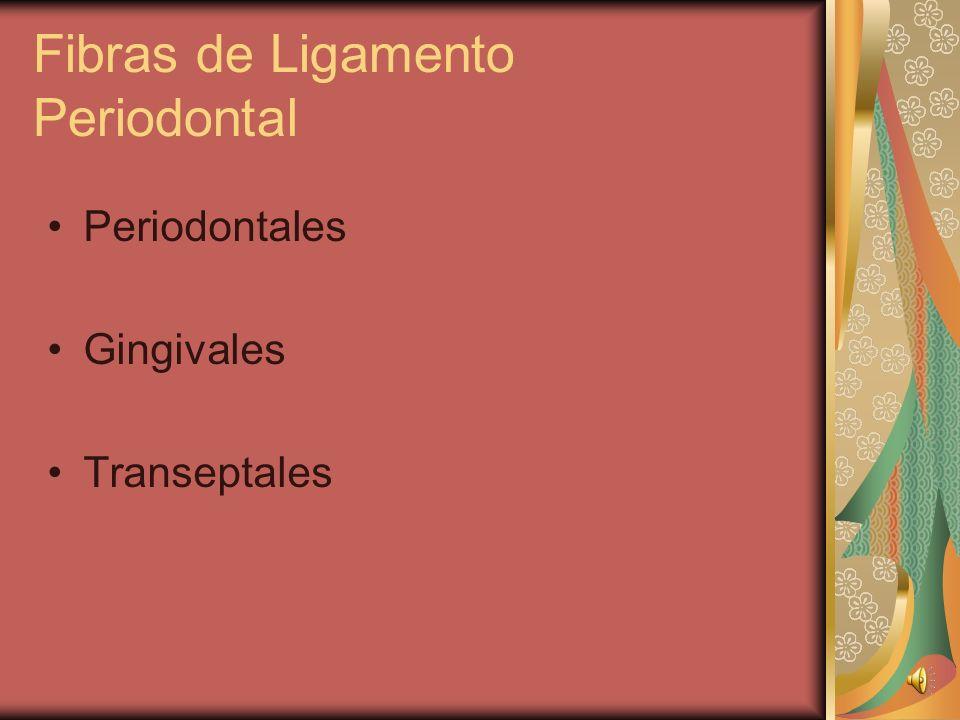 Ligamento Periodontal Funciones 1. Sosten y proteccion 2. Sensorial 3. Nutritiva 4. Formativa y reabsorcion