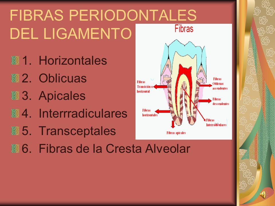 FIBRAS PERIODONTALES DEL LIGAMENTO 1.Horizontales 2.