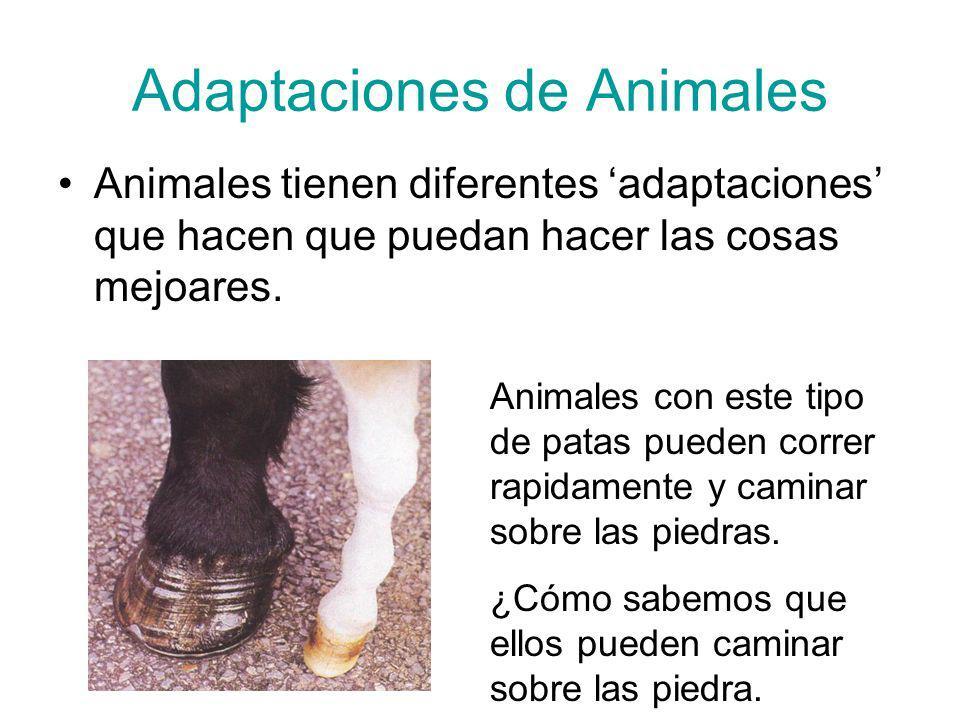 Adaptaciones de Animales Animales tienen diferentes adaptaciones que hacen que puedan hacer las cosas mejoares. Animales con este tipo de patas pueden