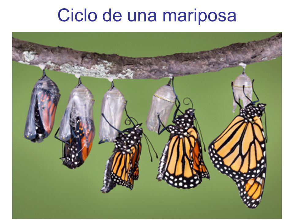 Adaptaciones de Animales Animales tienen diferentes adaptaciones que hacen que puedan hacer las cosas mejoares.