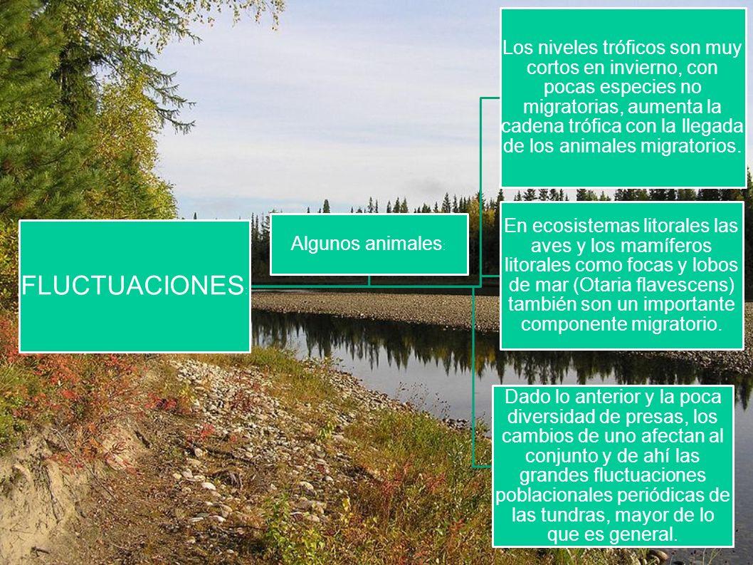FLUCTUACIONES : Los niveles tróficos son muy cortos en invierno, con pocas especies no migratorias, aumenta la cadena trófica con la llegada de los an