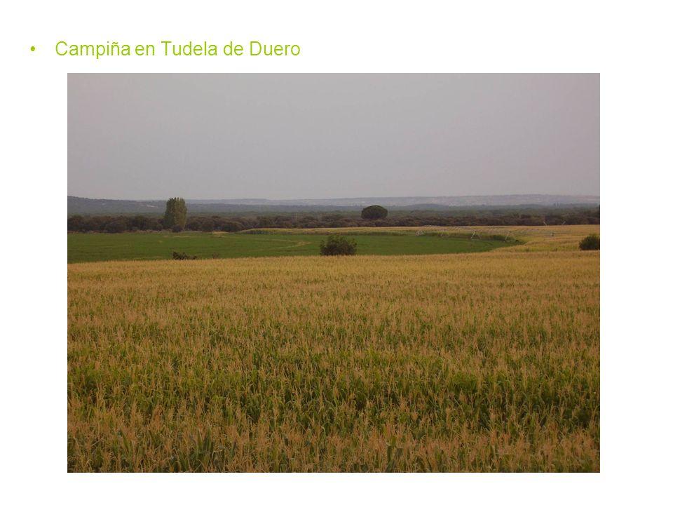 Campiña en Tudela de Duero